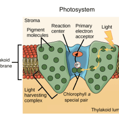 Light Reactions Photosystem Diagram D4120 Duct Smoke Detector Wiring Dependent Photosynthesis Reaction Article Khan Academy