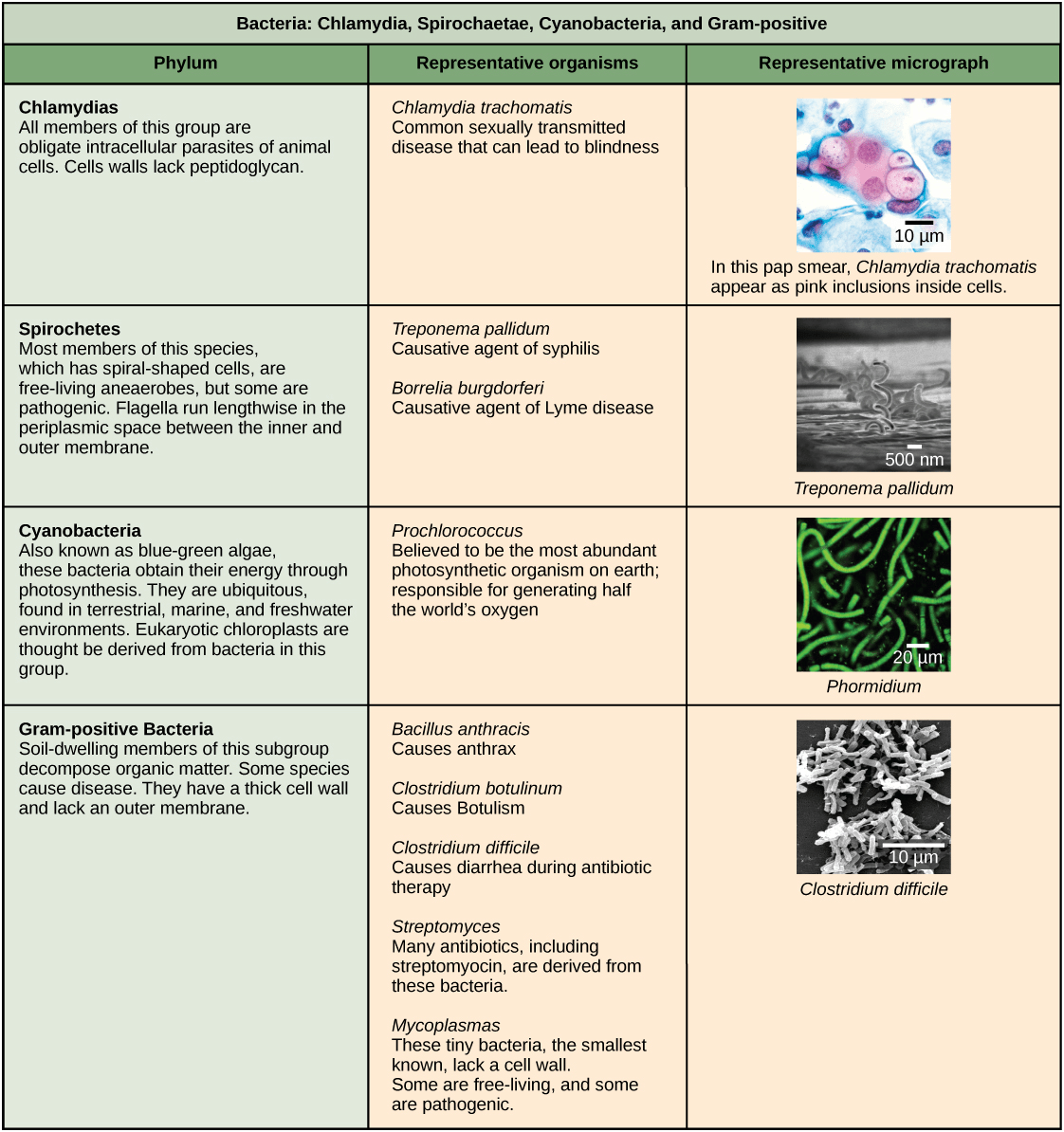 hight resolution of chlamydia spirochetes cyanobacteria and gram positive bacteria are described in this table