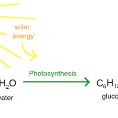 Diagram With Inputs And Outputs Of Photosynthesis Process Human Taste Buds Intro To Article Khan Academy In Solar Energy Is Harvested Converted Chemical The Form