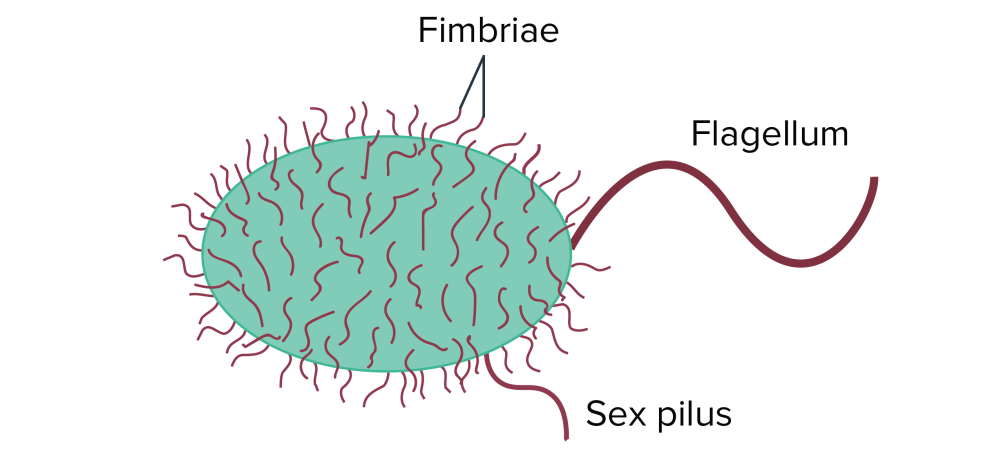 medium resolution of bacteria may have various types of surface structures these include fimbriae short protrusions found