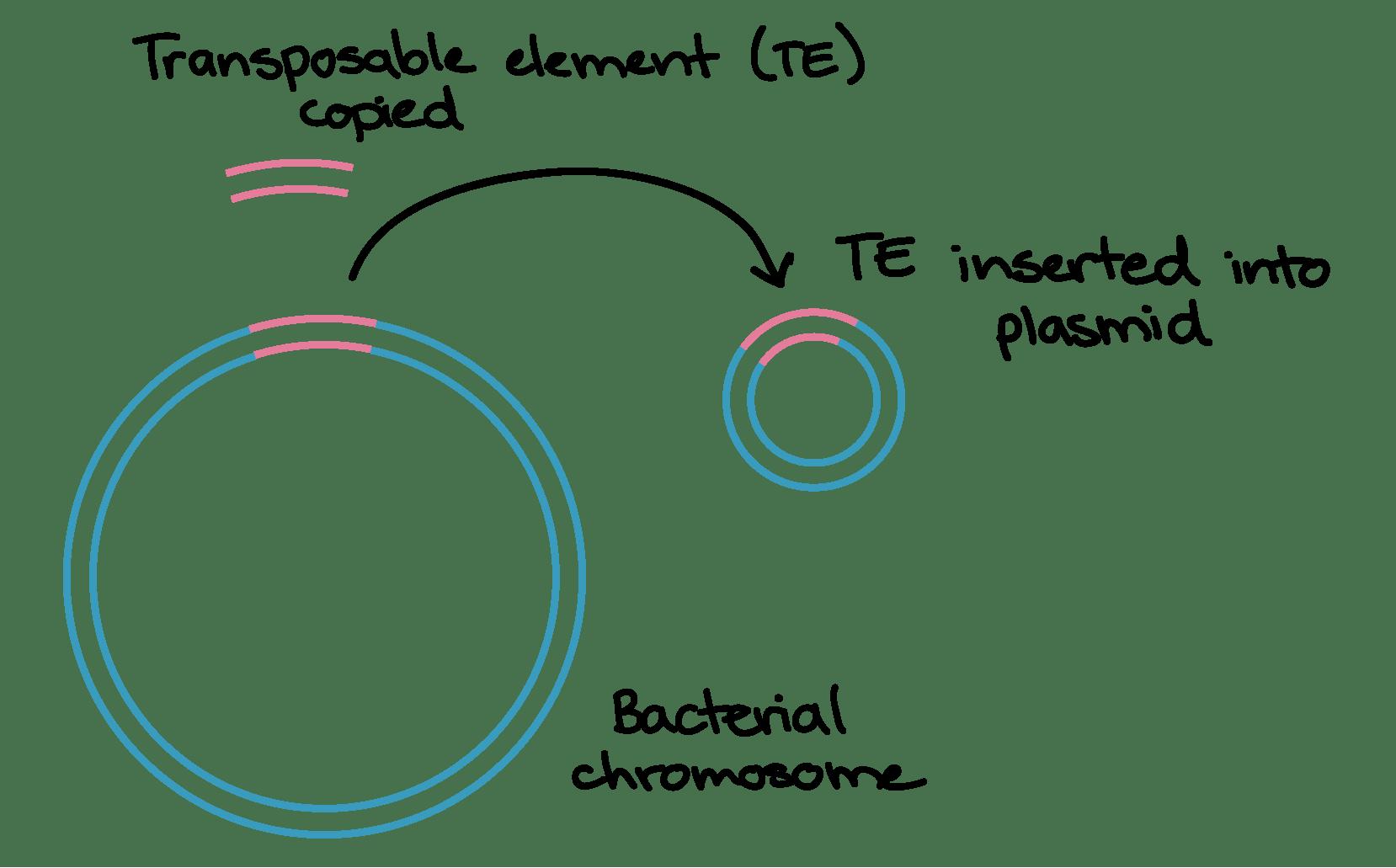 Prokaryotes Bacteria Worksheet Answers