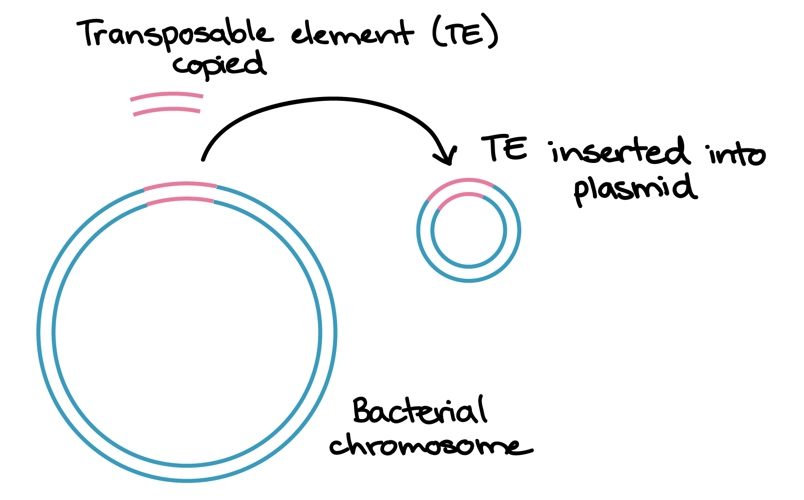 hight resolution of one way that transposons can move around the genome is by copying themselves and inserting the