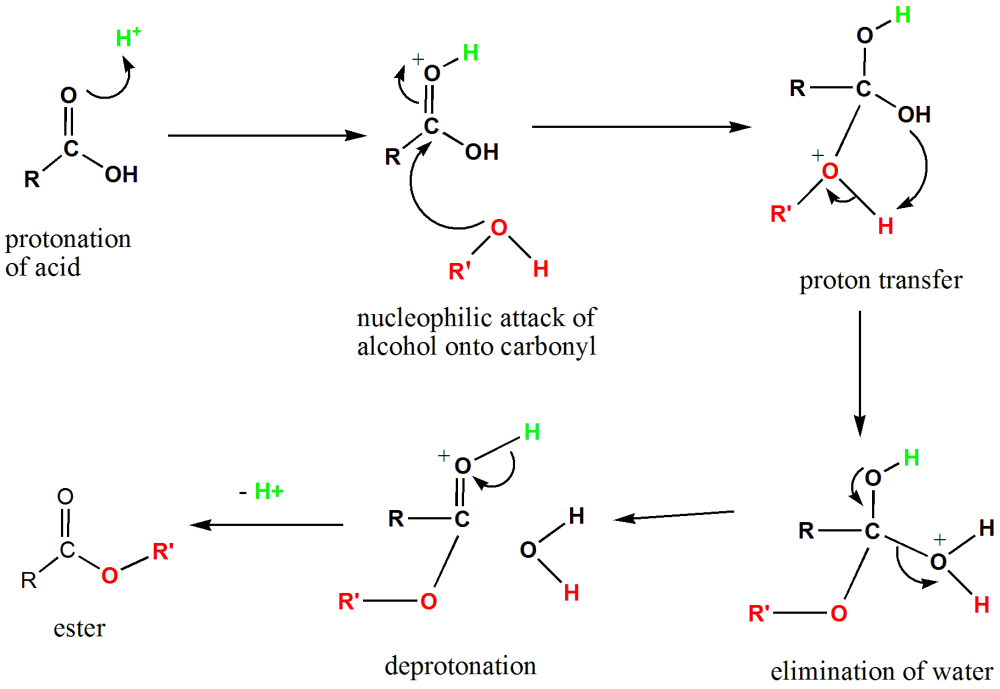 medium resolution of diagram of the mechanism of fischer esterification