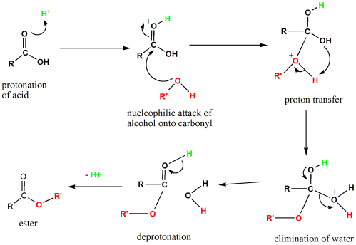 small resolution of diagram of the mechanism of fischer esterification