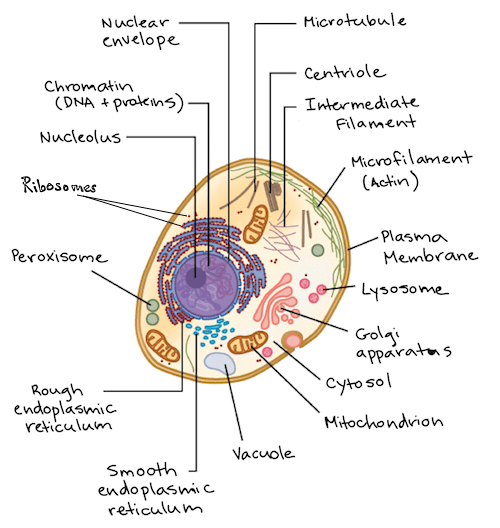 microbiology prokaryotic cell diagram labeled capacitor start run motor wiring intro to eukaryotic cells article khan academy of an animal with components lettered