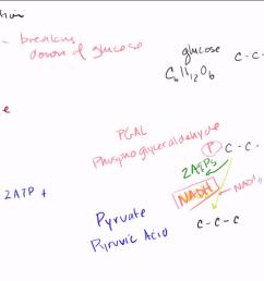 glycolysi diagram biology [ 1280 x 720 Pixel ]
