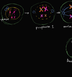 diagram step of meiosi [ 1280 x 720 Pixel ]