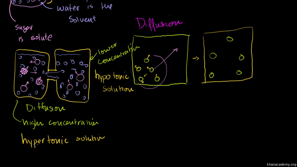 medium resolution of Diffusion and osmosis (video)   Khan Academy