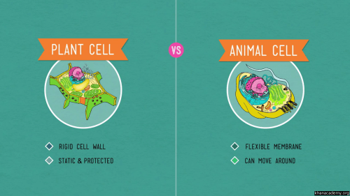 small resolution of Plant cells (video)   Crash Course: Biology   Khan Academy