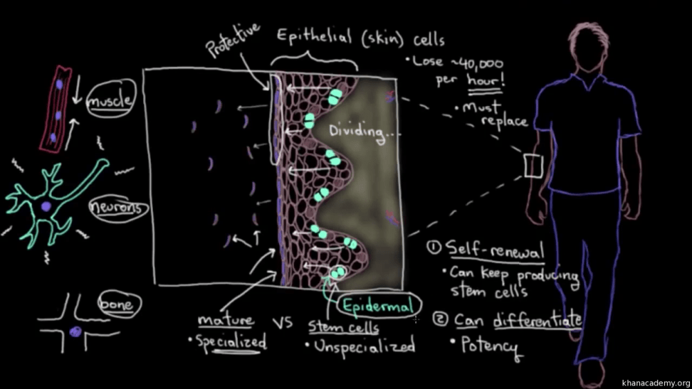 medium resolution of cell diagram history