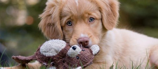 Puppy Care Stages Newborn To 48 Weeks Community