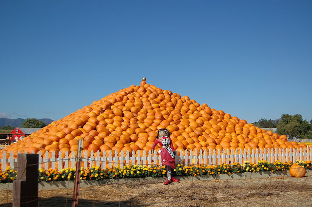 The 5 Best Pumpkin Patches In The Bay Area  Carecom