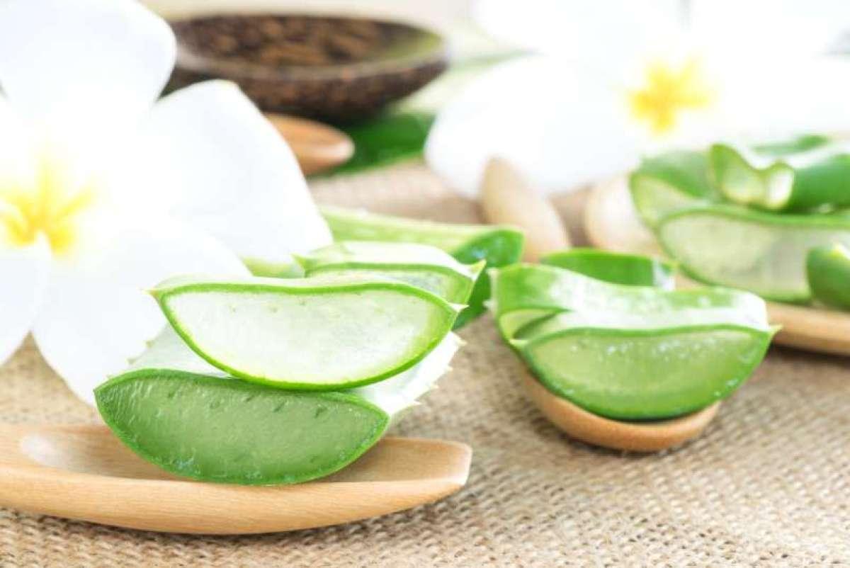 Aloe Vera - kožne tegobe lahko blažimo z naravnimi sredstvi.