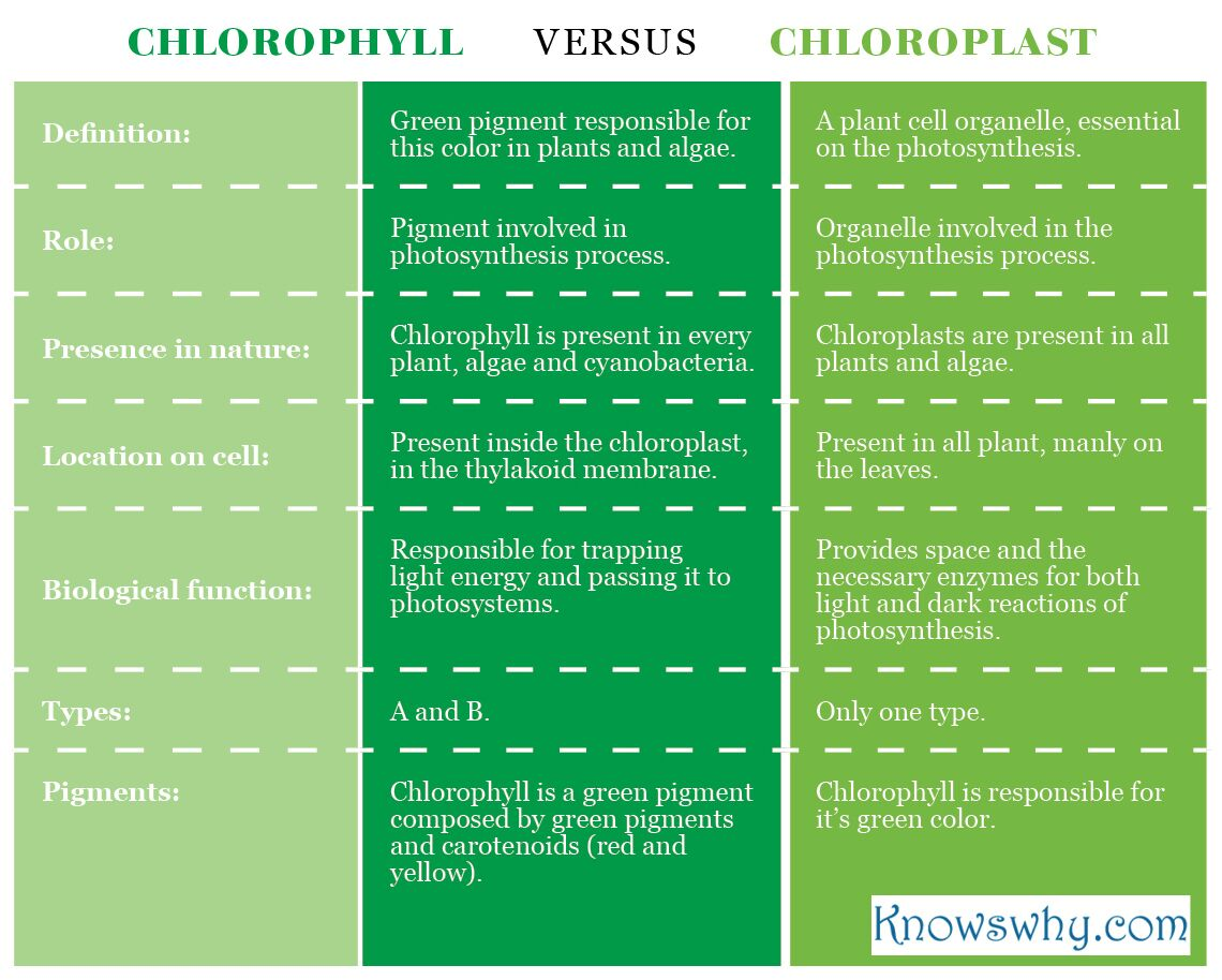 Difference Between Chlorophyll And Chloroplast