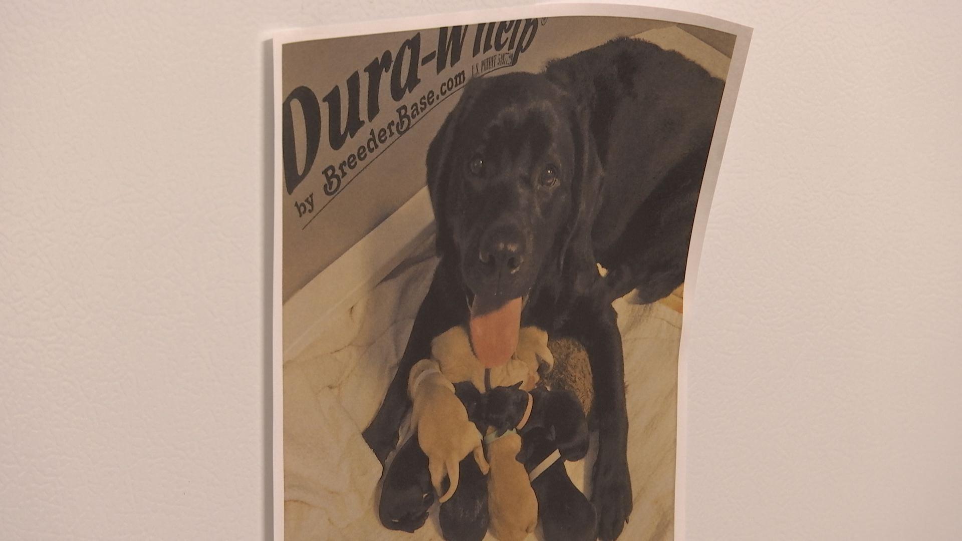 'Dogs for Better Lives' puppy webcam goes live - KOBI-TV NBC5 / KOTI-TV NBC2