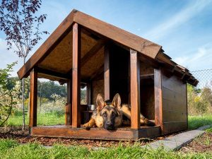 top niches pour chien en fevr 2021