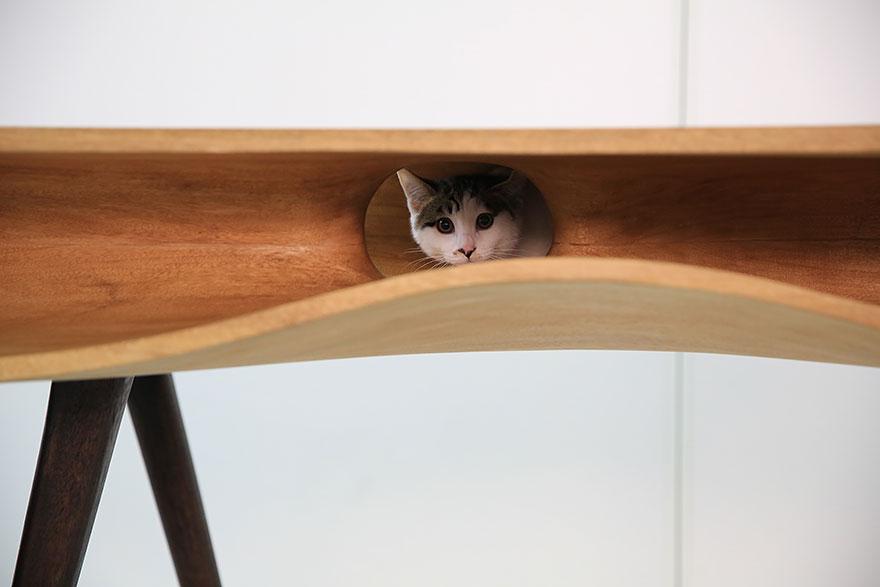 muebles gatos 5.1