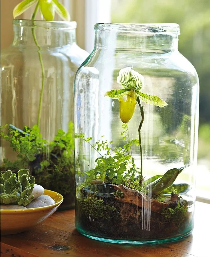 Jardin Jar DIY