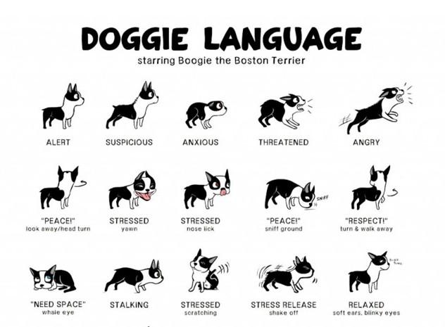 Pet-Speak : Understanding Doggie Language
