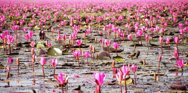 Территория Азии не зря привлекает туристов: озеро Нонг Хан Кумпхавапи, Таиланд