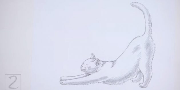Make dimming at the bottom of the head, front paws and abdomen, on the ears, at the top of the back, on the hind legs and the tail