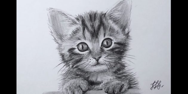 How to draw a cat's face in realistic style