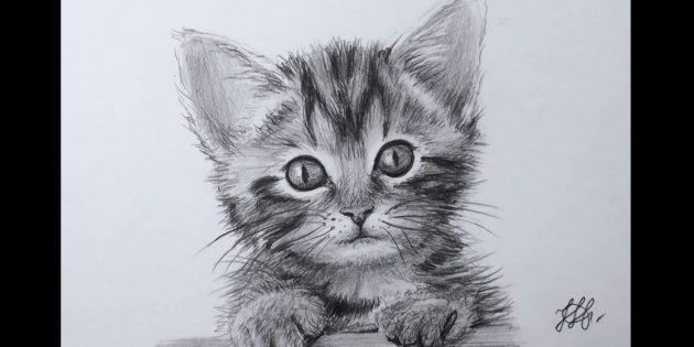 Hvordan man tegner en kattes ansigt i realistisk stil