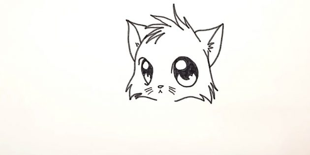 How to draw an anime cat: draw a focus on the bottom of the head