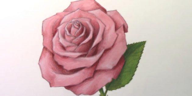 Как нарисовать раскрытую розу фломастерами и цветными карандашами