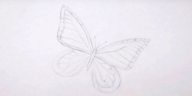 Next pattern on the lower wings