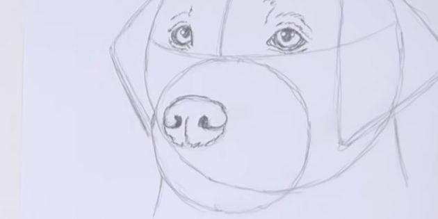 Desenhe o nariz de um cachorro