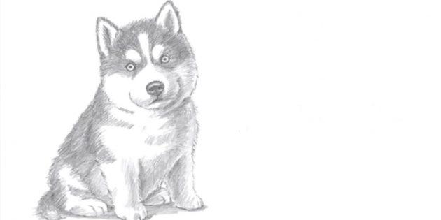 Como desenhar um cão sentado em estilo realista