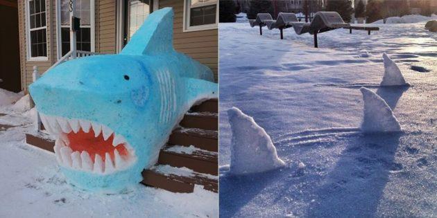 来自雪的鲨鱼
