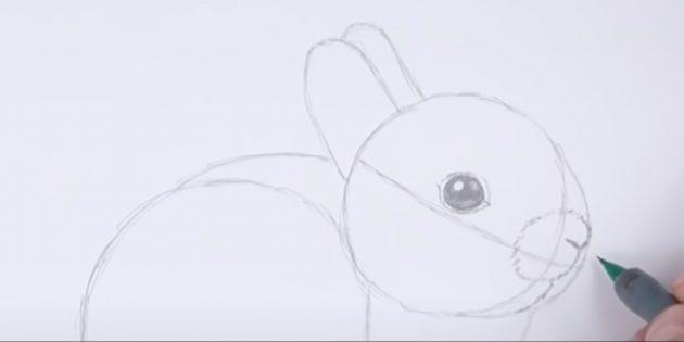 Sådan tegner du kanin: Detaljer næsepartiet