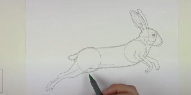 Cách vẽ thỏ rừng: Vẽ chân trước thứ hai