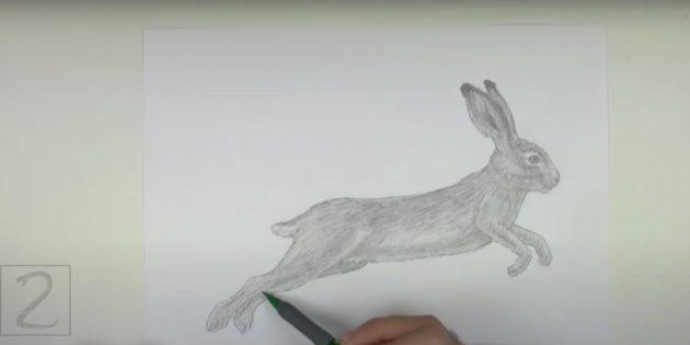 Hvordan man tegner en realistisk hare i et spring