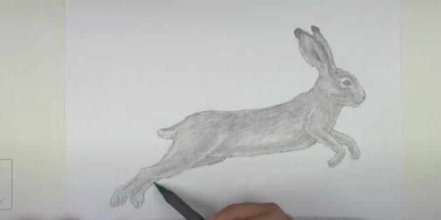 Làm thế nào để vẽ một con thỏ rừng: Creek cơ thể