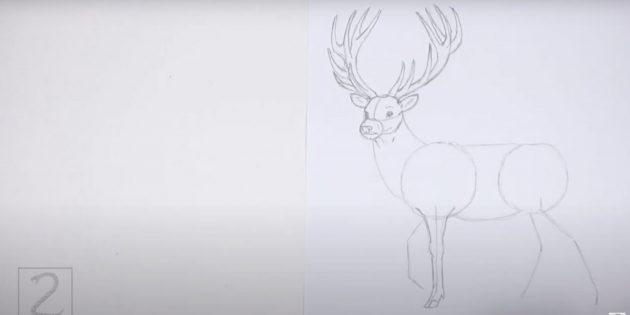 Miten piirtää hirvi: yksityiskohtainen suora etujalka