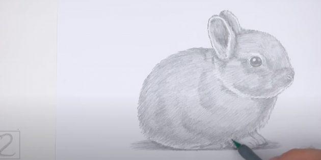 Hvordan man tegner en realistisk siddende kanin