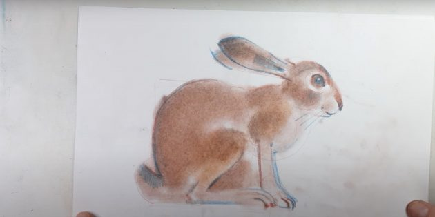 Làm thế nào để vẽ một thỏ rừng thực tế