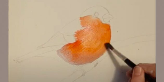 Como desenhar bullfinch: Adicione penas
