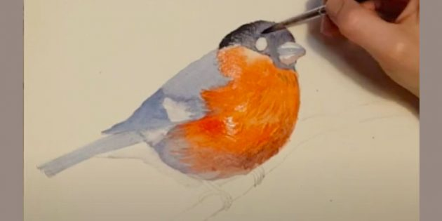 Slik tegner du kuler: Legg til tone av nebb og vinge