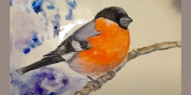 Hvordan tegne Bullfinch: Sett øyet og gjør potene