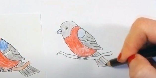 কিভাবে bullfinch আঁকা: একটি twig ছবি