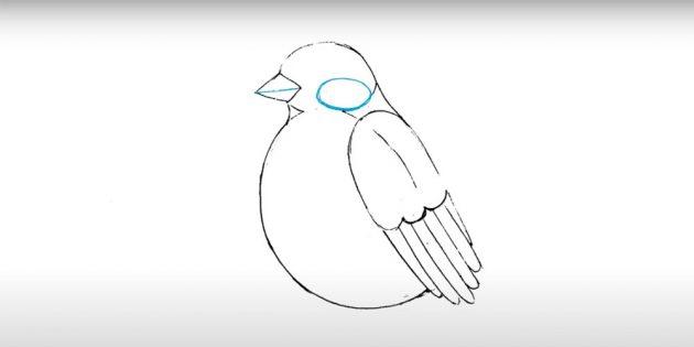 Como desenhar bullfiner: adicione o segundo oval