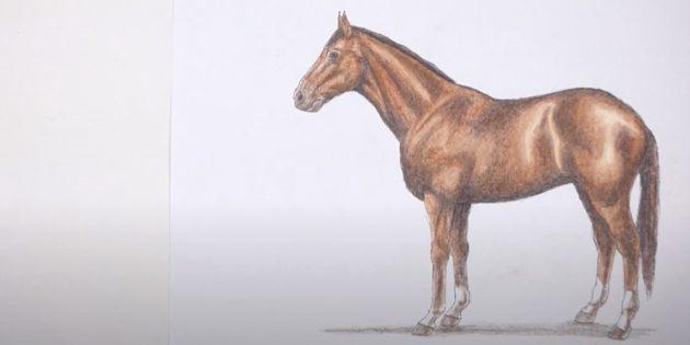 Maak een paard helderder
