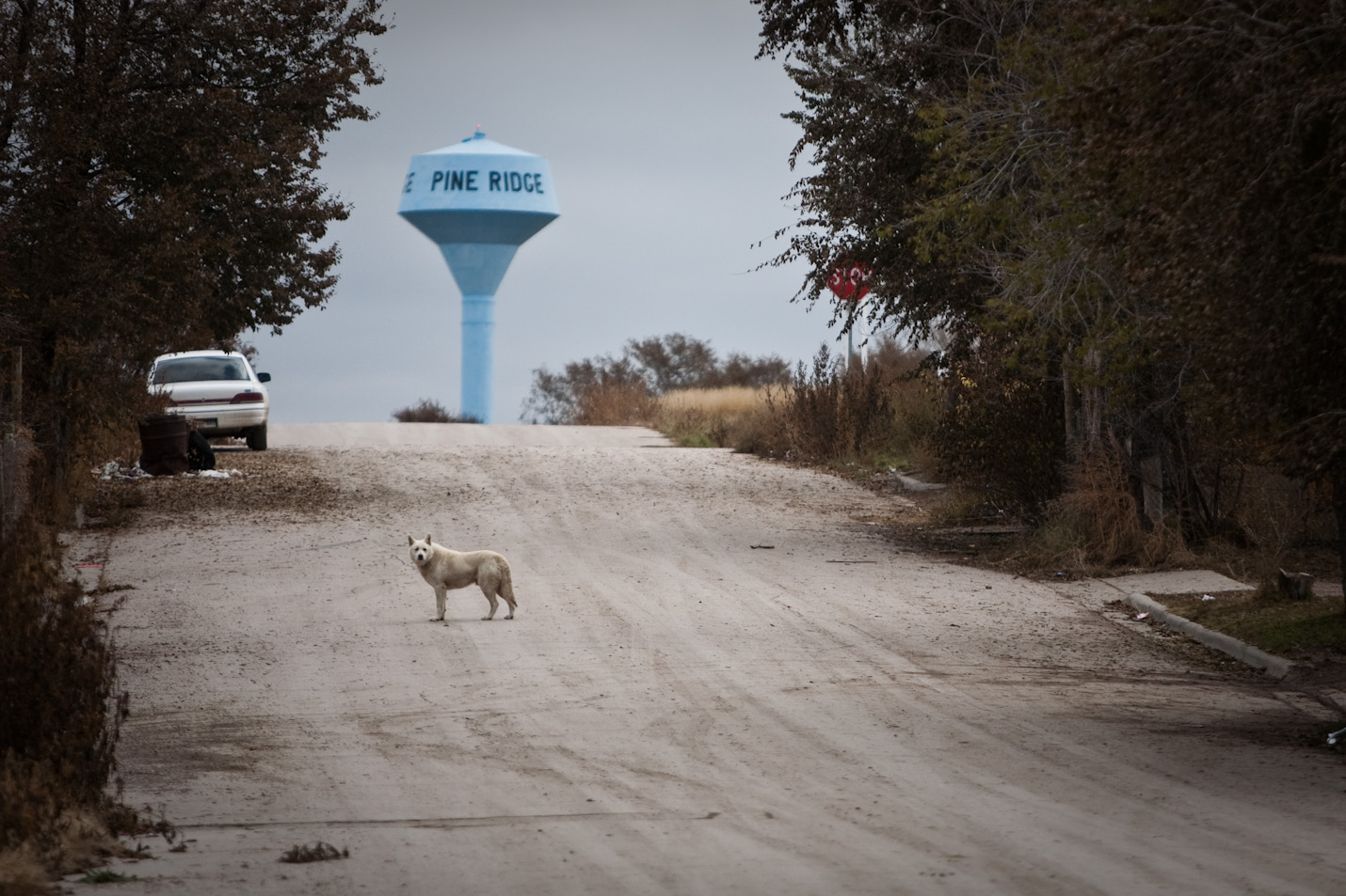 Pine Ridge Indian Reservation Dogs