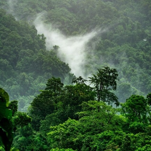 Seth MacFarlane Gives $1 Million to Rainforest Trust to Stop Deforestation