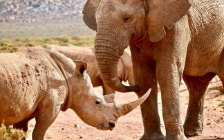 Outrage as South Africa Law Making It Legalizing to Eat Elephants, Giraffes and Other Endangered Species