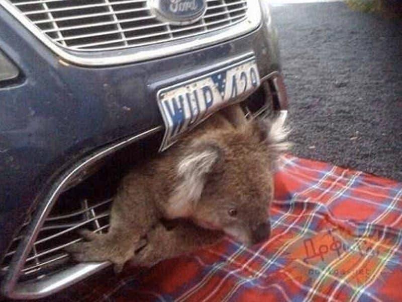 Cat Woke Wrong Side Bed